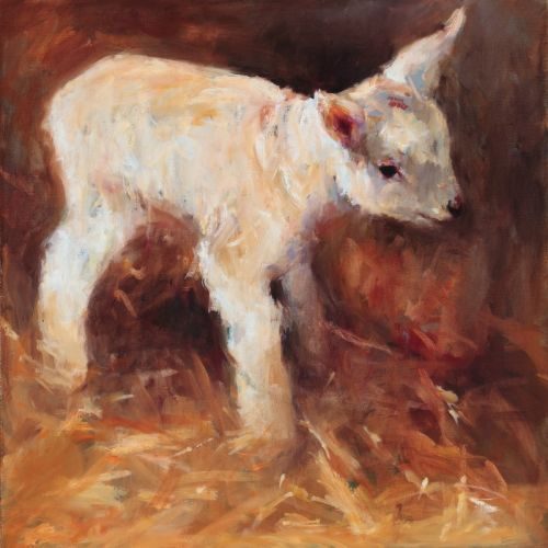 Little lamb, oil, 2009, 50 x 50 cm, Sold